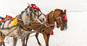 Horses and Winter Landscape. Standing on the snow, Local Embellished Horses and Winter Landscape Stock Image