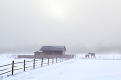 Horse on winter pasture in misty day Royalty Free Stock Photography