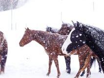 Horses winter snow Royalty Free Stock Photo