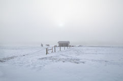 Horses on winter snowy pasture in misty morning. Holland Royalty Free Stock Photos