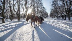 Horses in the winter sun lights, PAVLOVSK, ST. PETERSBURG, RUSSIA - february 21, 2018 Stock Photos