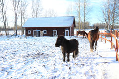 Horses a winters day in their paddock Stock Image