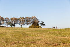 Horses Women Riders Landscape. Horses women riders riding across tree grass fields afternoon landscape color Royalty Free Stock Photo