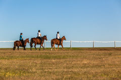 Horses Women Riders. Riding grass fields afternoon color Royalty Free Stock Photo
