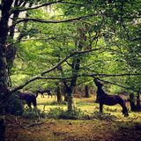 Horses. In woods Royalty Free Stock Photography