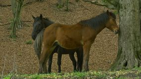 Horses in the woods