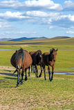 horses in WulanBu all grassland ancient battlefield royalty free stock image