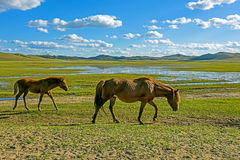 horses in WulanBu all grassland ancient battlefield royalty free stock images