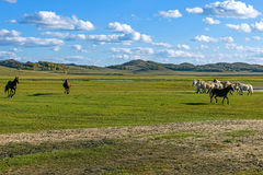 horses in WulanBu all grassland ancient battlefield stock photo