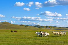horses in WulanBu all grassland ancient battlefield royalty free stock photography
