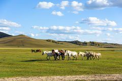 horses in WulanBu all grassland ancient battlefield royalty free stock photos