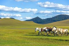 horses in WulanBu all grassland ancient battlefield stock photos