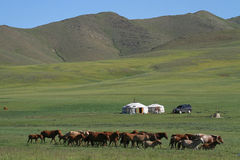 Horses and yurts in the mongolian steppe Stock Image