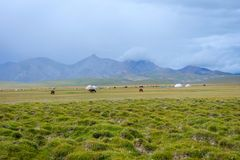 Horses and yurts by Song Kul lake, Kyrgyzstan. Horses and yurts, typical nomad houses at stunning landscape by Song Kul lake, Kyrgyzstan Royalty Free Stock Photos