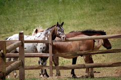 Horses1 Royalty Free Stock Images