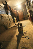 Horseshoe. Prepares to attach horseshoe to hoof Royalty Free Stock Images