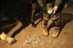 Horseshoe. Farrier prepares to attach horseshoe to hoof Stock Images