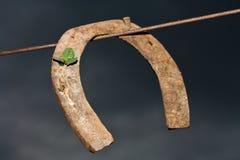 Horseshoe. Very old horseshoe on a clothesline and a shamrock Stock Image