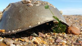 Horseshoe crab helmet. Royalty Free Stock Image