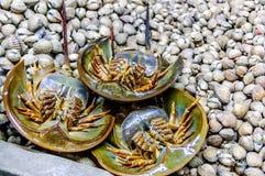 Horseshoe crabs & shellfish on stall Royalty Free Stock Photos