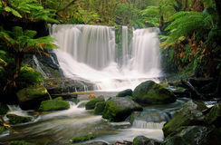 Horseshoe Falls. Mt Field National Park, Tasmania Stock Photography