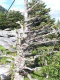 Horseshoe Falls stock image