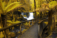 Horseshoe Falls in Mount Field National Park Stock Photo