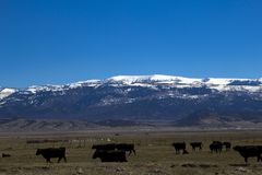 Horseshoe Mountain in April. Photograph of the Horseshoe Mountain in Sanpete County, Utah, with cows in the foreground Stock Photos