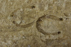 Horseshoe prints in the dry mud.  royalty free stock image