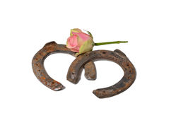 Horseshoe and Rose Royalty Free Stock Images