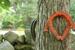 Horseshoes. Hanging on a tree Stock Photography