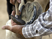 Horseshoes. A cowboy fixes his horse's horseshoe Royalty Free Stock Photography