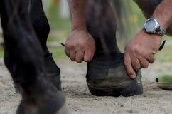 Horseshoes Stock Photos