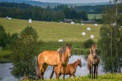 Horsess en hooibalen stock afbeelding