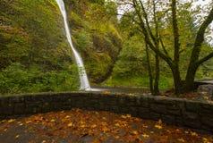 Horsetail падает осенью Стоковые Фото