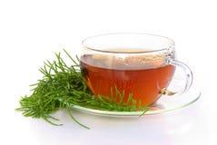 Horsetail поля чая стоковое изображение