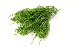 Horsetail Stock Photos