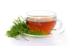 Horsetail de campo do chá imagem de stock