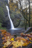 Horsetail Falls Oregon in Fall Royalty Free Stock Photo