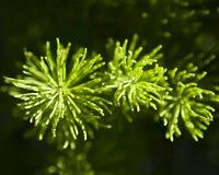 Horsetail från ovannämnt i direkt solljus Royaltyfri Bild