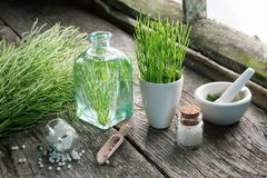 Horsetail healing herbs, bottle of equisetum infusion, mortar and bottles of homeopathic globules. Homeopathy and herbal medicine royalty free stock images