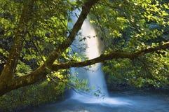 Horsetail siklawy w Kolumbia rzeki wąwozie fotografia stock