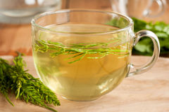 Horsetail tea made from fresh horsetail Royalty Free Stock Photo