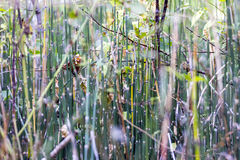 Horsetail thicket in the woods. Selective focus Stock Image