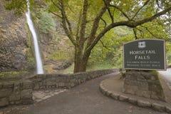 Horsetail valt de Rivierkloof Oregon van Colombia Royalty-vrije Stock Foto's