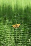 Horsetails e borboleta fotografia de stock royalty free
