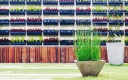 Horsetails struikwaterplanten in de concrete bloempot decorat stock afbeelding