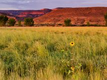 Late July Western Colorado. Horsethief Canyon State Wildlife Area in western Colorado has scenic views, migratory birds, and diverse wildlife. Riparian landscape royalty free stock photos