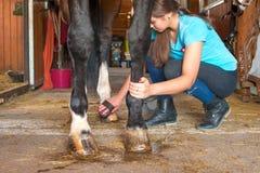 Horsewoman предпринимателя позаботить о копыто лошади каштана стоковые фото