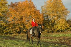 Horsewoman. Royalty Free Stock Photos
